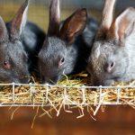 Feeding Rabbits