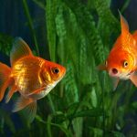 Keeping Fish: A Guide to Start your Fish-Keeping Hobby