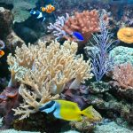 Keeping Fish: Maintaining an Aquarium