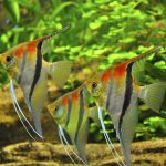 Aquarium Maintenance: Water Condition