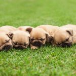 Starting a Dog Breeding Business