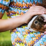 Cuddling with Your Cavy