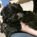 Billy – Dog Breed Information and Pictures