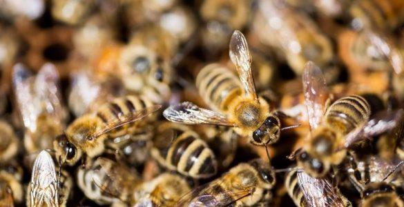 Bee Keeper Tips