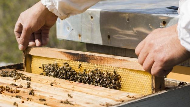 bee castes