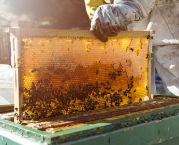 bee keep hive
