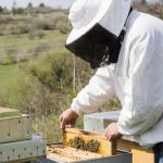 Start a Bee Keeping Business With These Supplies