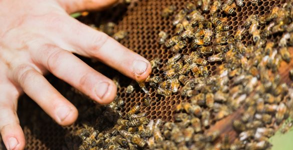 Beekeeper Supplies