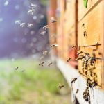 Bee keeping: Origins and supplies for wild honey harvesting