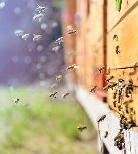 Bee keeping hive