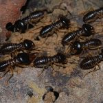 A guide to Termite Exterminator Inspections & Treatments