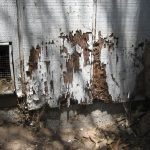 Termite Exterminator Treatments